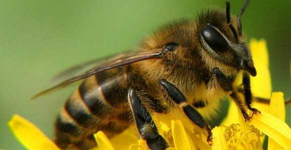 пчела укусила в клитор